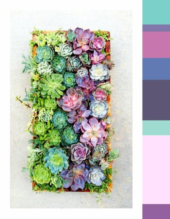 fall colors succulents